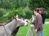 Les Chambres d'hôtes de Vioreau • éco-Tourisme • JOUE SUR ERDRE