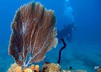ANSE CARAIBE PLONGEE • éco-Tourisme • POINTE NOIRE (2)