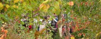 Jardin Botanique de la Presle • éco-Tourisme • NANTEUIL LA FORET (1)
