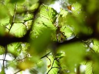 Elisabeth Nieddu • naturopathe • BOULOGNE BILLANCOURT (2)