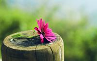 Sophie Biguet • praticien en reiki • FONTAINE LES GRES