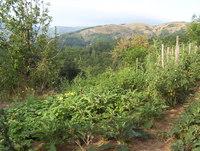 La ferme du Monteil • éco-Tourisme • JAUJAC (1)
