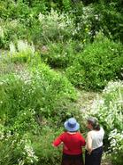 La ferme du Monteil • éco-Tourisme • JAUJAC (2)