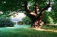 Domaine de Kerdréan • éco-Tourisme • BRANDIVY (3)