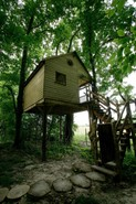 Cabane perchée